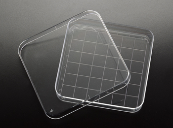 Square Petri Dish with Grid