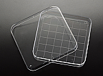 Square Petri Dish with Grid